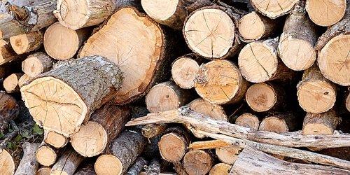 Bomen / Struiken rooien of verwijderen